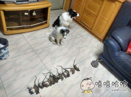 狗拿耗子。。。拿的飞起