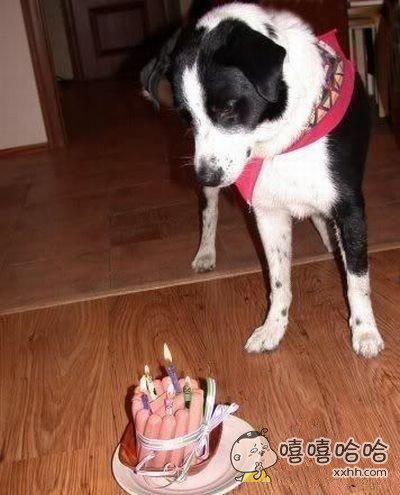 给狗狗的生日蛋糕,怎么好像是炸药包呢