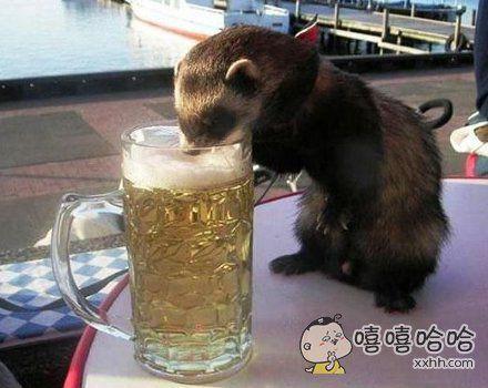 俺也来点啤酒享受一下。