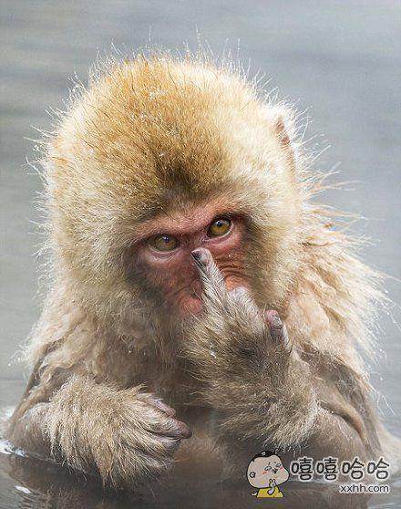 这猴子成精了