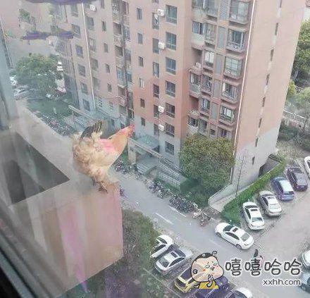 """闪开,飞""""鸡""""要起飞了"""