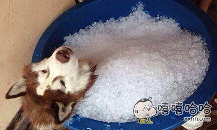 生无可恋的狗狗。。。