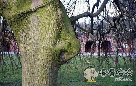 比你还会呼吸的树