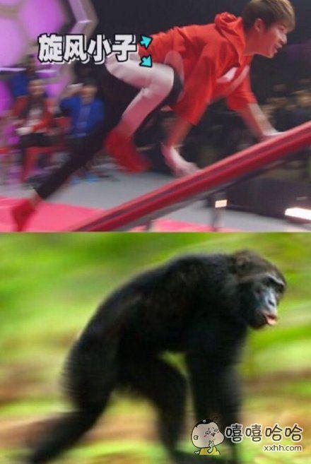 终于找到这个猴子做对比!