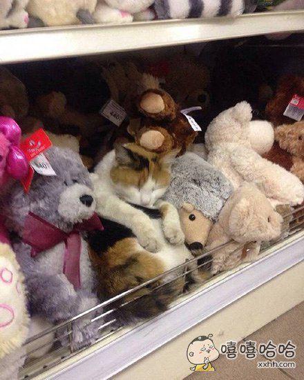 你和其他玩具一起在世界的角落里睡眠,等待爱你的人过来将你带走。