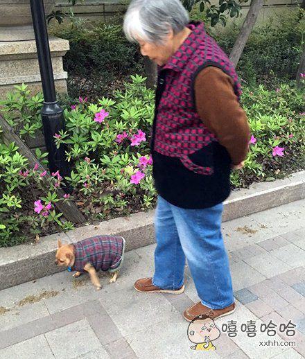 经过奶奶的手,狗狗秒变画风