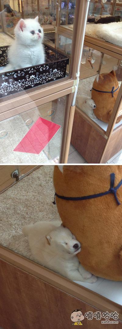 报告,发现了一只非常抢镜的狗狗