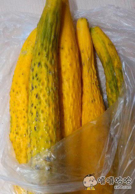 它让我懂得了黄瓜为什么叫黄瓜