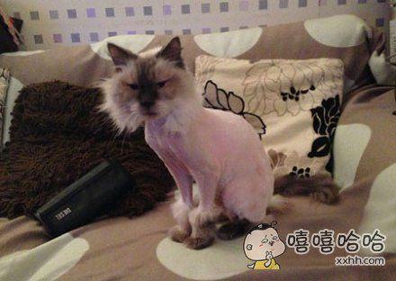 给我家猫剪完毛之后,它就这样一动不动的看着我,看了好久。。。