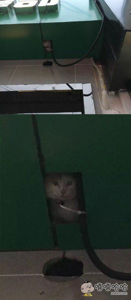 人在做,猫在看,举头三尺有猫咪