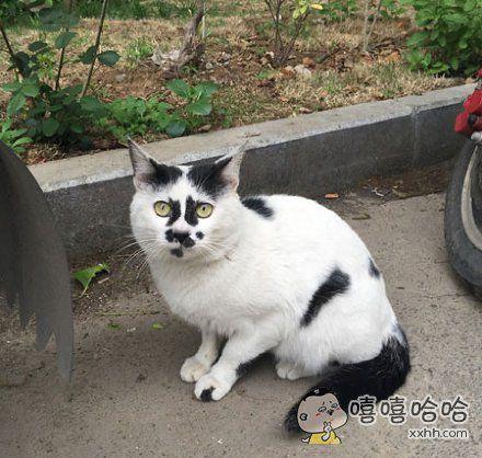 偶遇一只real丑的喵。整个猫就感觉是甩毛笔把墨汁甩到白纸上。喵:我也就随便长长,对称这件事和我的喵生没啥关系。
