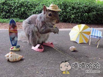一只爱装扮的小松鼠