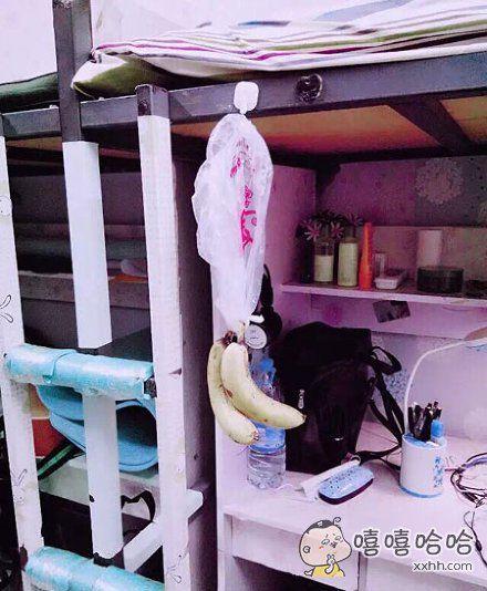 室友说,香蕉这么放,会熟的慢一点,因为香蕉觉得,它还在树上