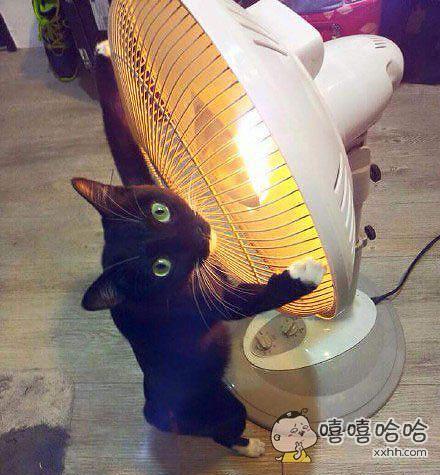 准备关暖扇的时候,家里的喵星人便马上飞扑出来抱著了暖扇。喵∶偶快冷成汪了!谁关我的暖扇我就跟他拼了!