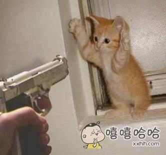 要不是看到你有枪,早上去给你一巴掌了!