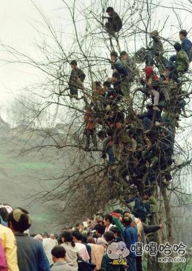 千年老树长满了人。。。