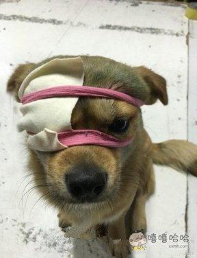 我是一只独眼狗呀