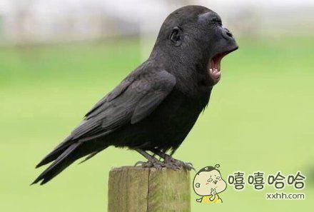 来自猩猩的鸟
