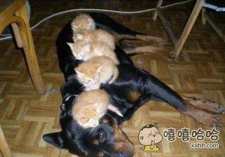 还是睡在这里最舒服了