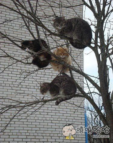 树上结了喵果子,可以采摘了~