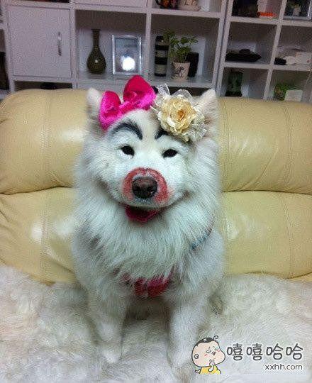 狗狗也爱美