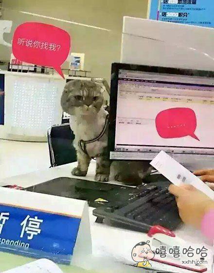 昨天一位用户来退宽带,上网猫没带,营业员跟他说明天带好身份证和猫再来办理,今天他来了……带来了……