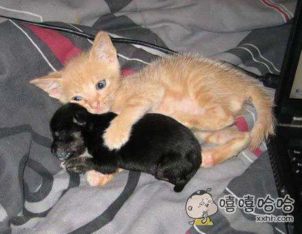 宝贝睡吧,有猫哥保护你