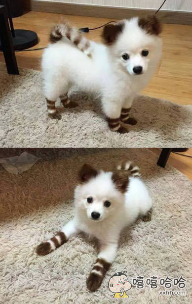 说!你是不是小浣熊!