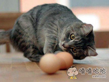 谁的蛋掉了?