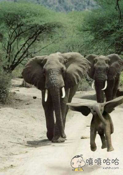 小飞象是真实的