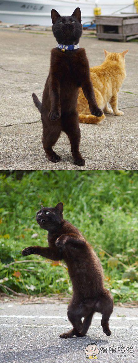 岛国一摄影师发现黑猫很难拍,于是捕捉了一些动态瞬间,觉得这样会比较帅气……最终果然拍出了满屏的智障感