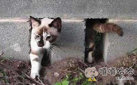这猫练过瑜伽吧