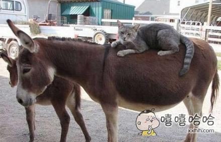 这是朕的新坐骑,你有什么不满意的吗
