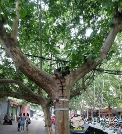 这是树坚强