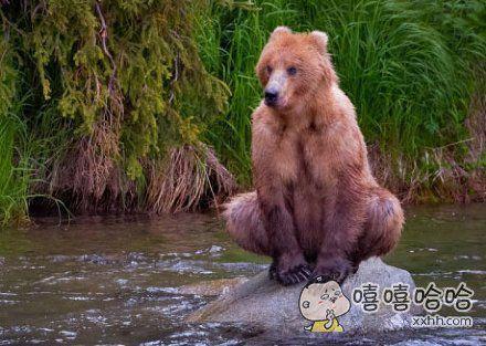 发现一头忍者熊,你这是在修炼吧??
