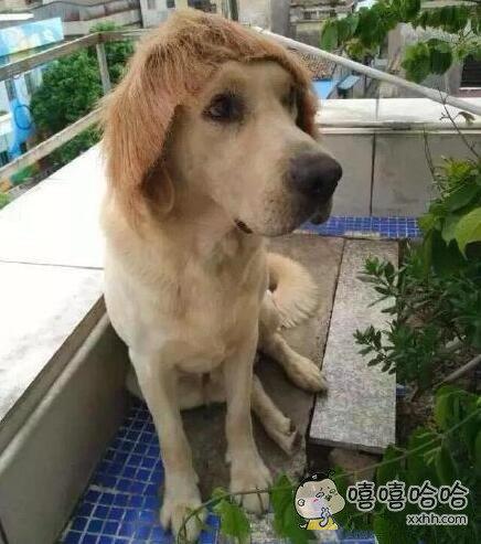 带上假发的阿汪是不是很萌啊