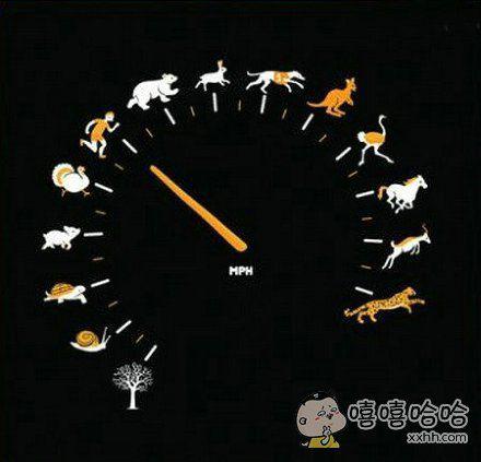 史上最生动的汽车时速表