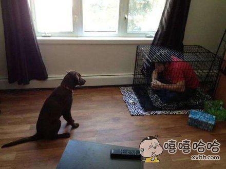 狗:我的主人可能是个智障吧!
