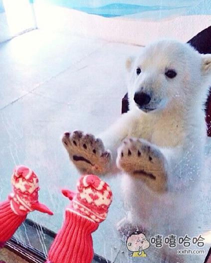国外网友拍到了女儿跟小北极熊隔着玻璃击掌的瞬间,简直萌到自带圣光