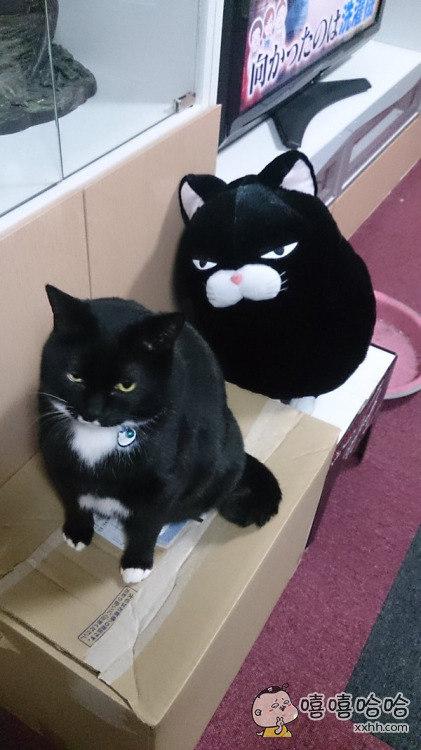 网友买了一个新的玩偶,结果家里的猫感觉自己的地位受到了威胁!