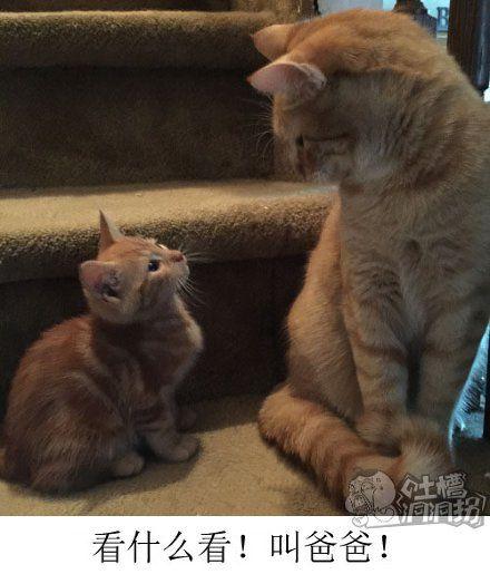 新猫进家门,第一件事应该是拜码头,懂吗?