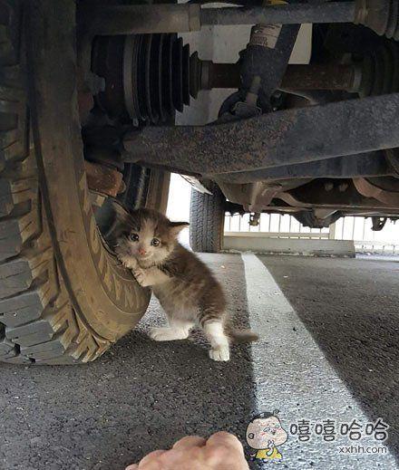 在车下发现的小奶喵……pose不错!