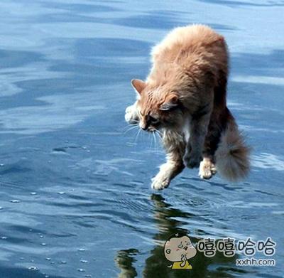 轻功水上漂