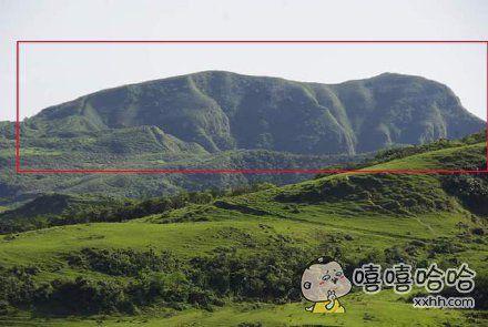 网友在新北桃源看见一只大狗