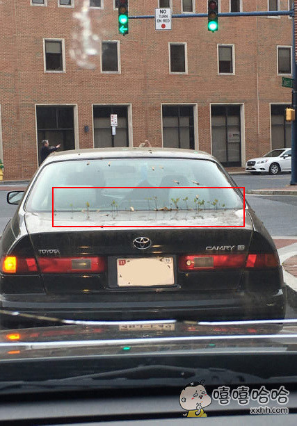 哥们儿你的车长草了。。。