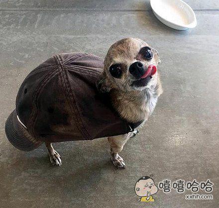 分享一只乌龟