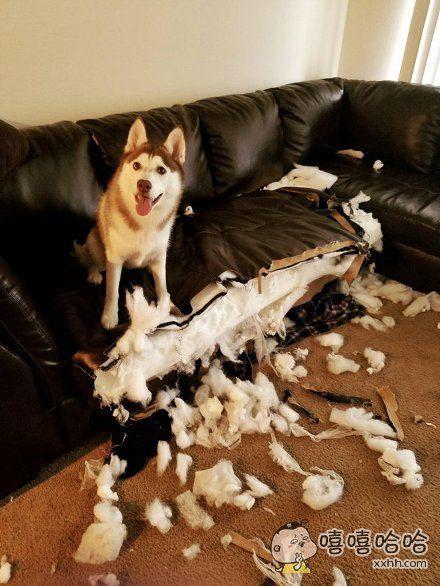 帮你检查了一下,这沙发质量还不错