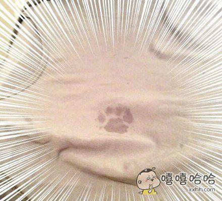 岛国网友早晨去洗澡时,小猫在他脱下的衣服上留下了爪印