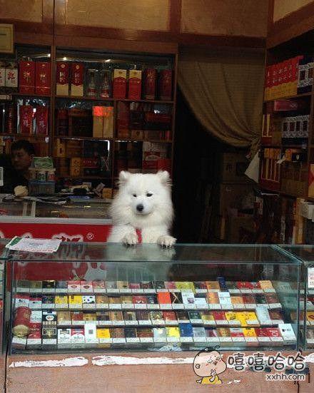 主人在里边玩游戏,这货就一直在柜台上守着
