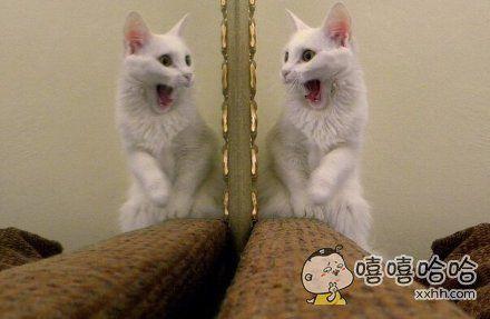 一位推主说她抓拍到了她家喵第一次第一次看到镜子时的样子